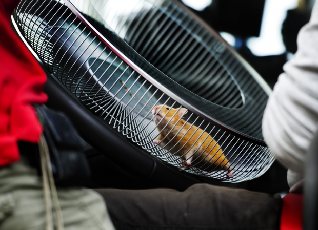 Volvo Trucks New Stuntman Is A Hamster