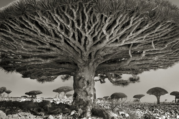 Beth-Moon-Island-of-the-Dragons-Blood-Heart-of-the-Dragon-2010-11-courtesy-of-PH-Neutro-gallery