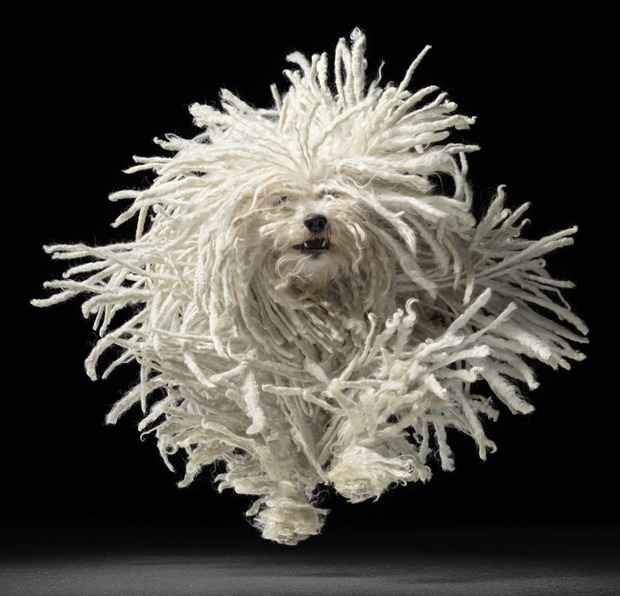 Tim-Flach-Flying-Mop-2011-courtesy-of-espace-art-22